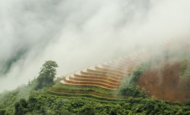 Terraces fields sparkle in Sapa
