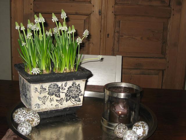 Ideer til hvit vårblomstring i krukker - Perleblomster i stuen