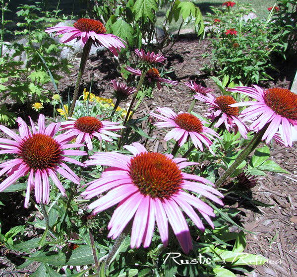 The best perennials for the garden