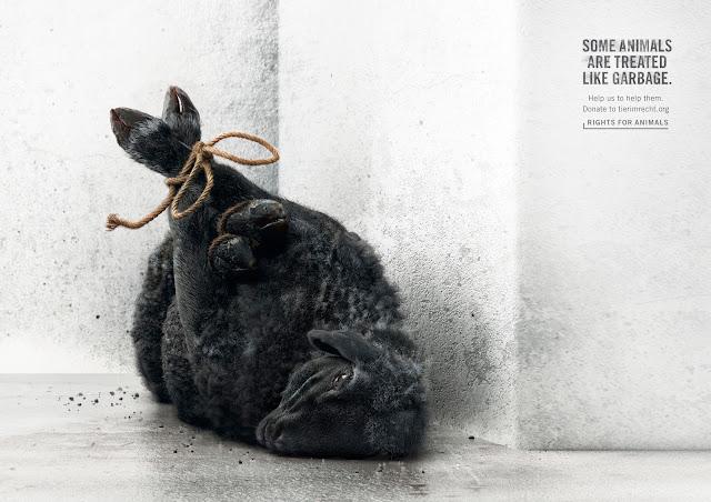 Fuerte-campaña-protección-animal-fundación-Suiza-Tier-im-Recht