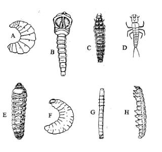 [PDF] Manual de Prácticas de Parasitología Veterinaria (ESP)