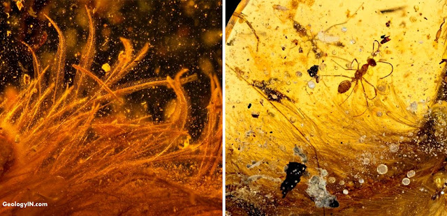 Scientists Discover Beautiful Feathered Dinosaur Tail Trapped in Amber