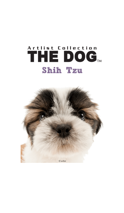 THE DOG Shih Tzu