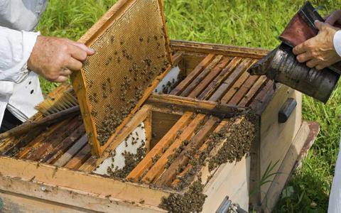 Nέα σελίδα στον Μελισσοκομικό Συνεταιρισμό Αιτωλοακαρνανίας με πρόεδρο τον Θανάση Κατσαούνη