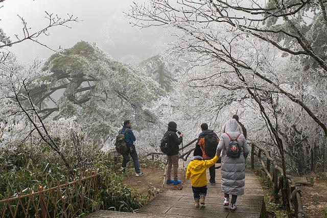 Randonneurs parmi les arbres givrés au sommet du Huangshan