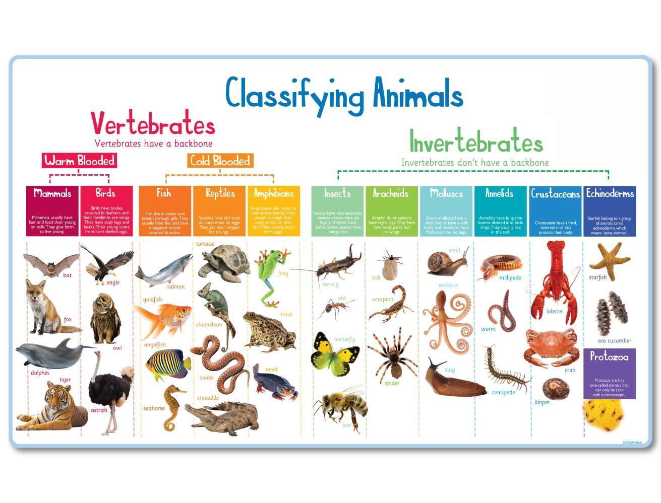 Villarejo Is Bilingual Animal Classifications