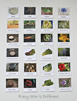 Parts of a plant sorting activity (free printable).