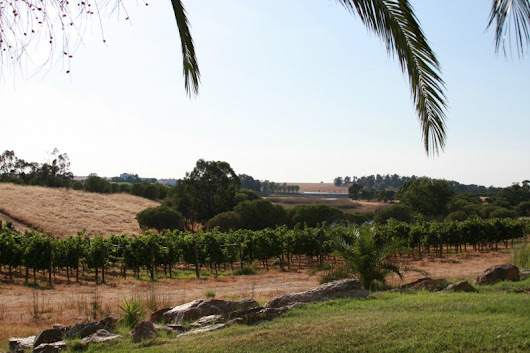 The Wine Chronicles | Wine Tourism in Portugal