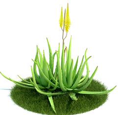 Medicinal Plants Aloe Vera Medic Box
