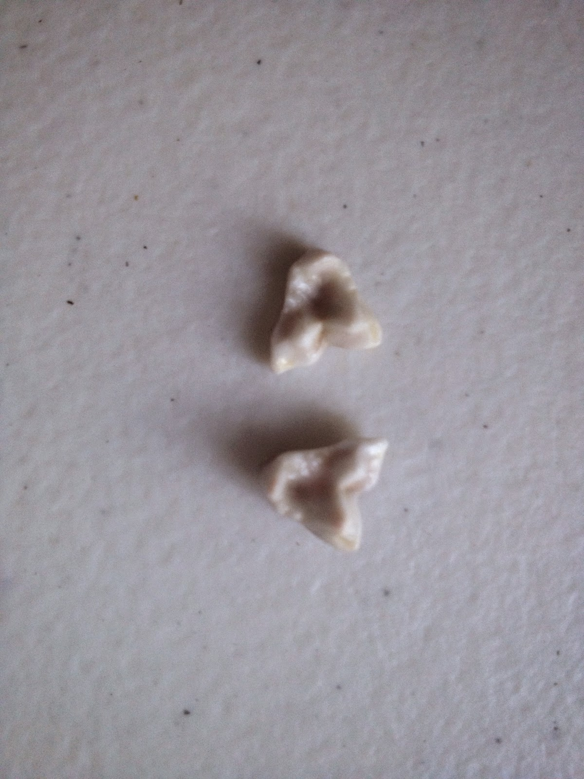 what teeth do puppies lose
