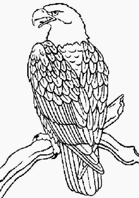 Bald Eagle Head Coloring Page – Colorings.net
