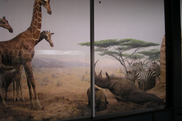 Travel With Kevin And Ruth Field Museum Of Natural