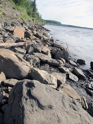 Thousands of dinosaur tracks found in Alaska