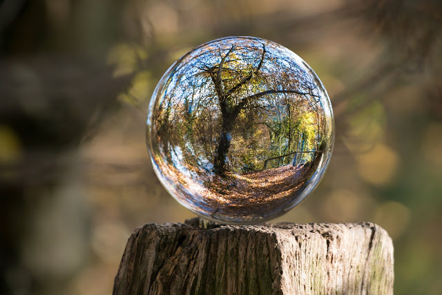 Trees In Glass Ball Sphere Nature HD Wallpaper