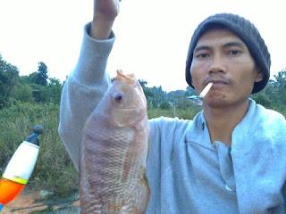 umpan serbuk ikan nila mancing di alam liar
