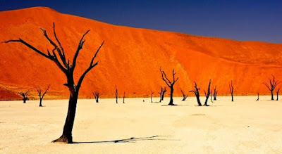 deadvlei forest namibia