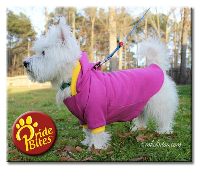 White West Highland Terrier wearing purple hoodie