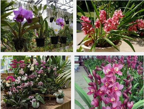 Outdoor orchid plants