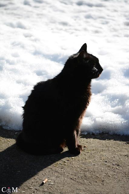 czarny kot, nazwa dla firmy, naming