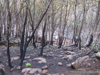 4 - Rastros del incendio y la tromba en Cerro Viejo