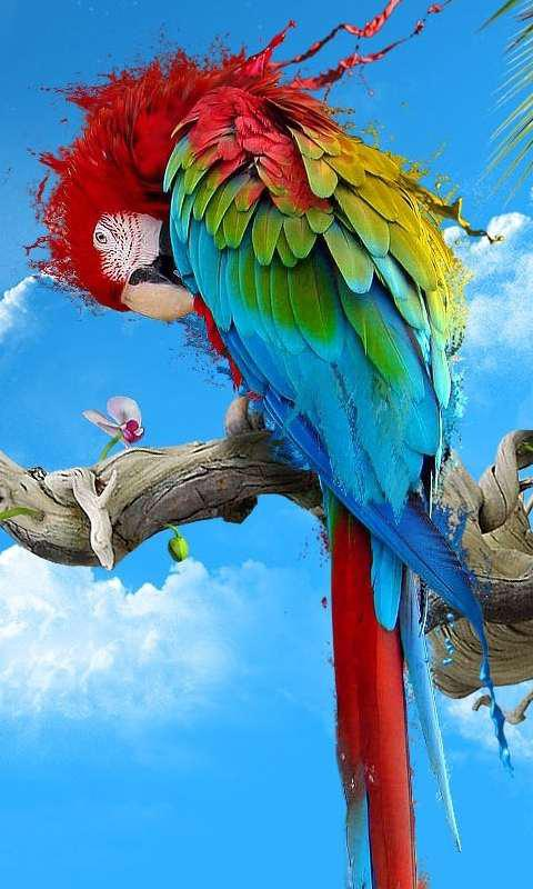 Cartoon Girl Wallpapers For Mobile Hd Wallpaper For Pc And Mobile Colour Full Parrot Birds