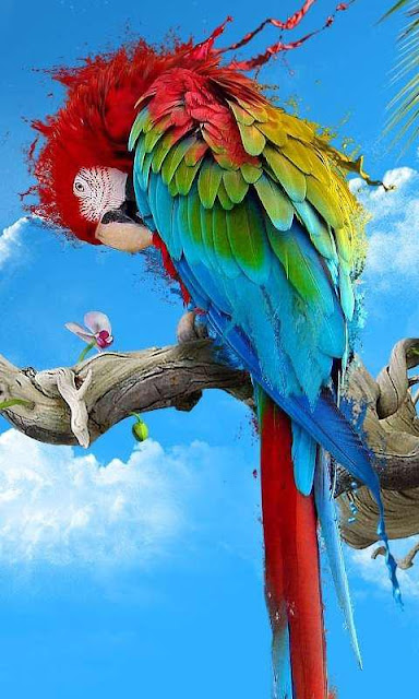 HD WALLPAPER For Pc and Mobile : Colour full Parrot Birds