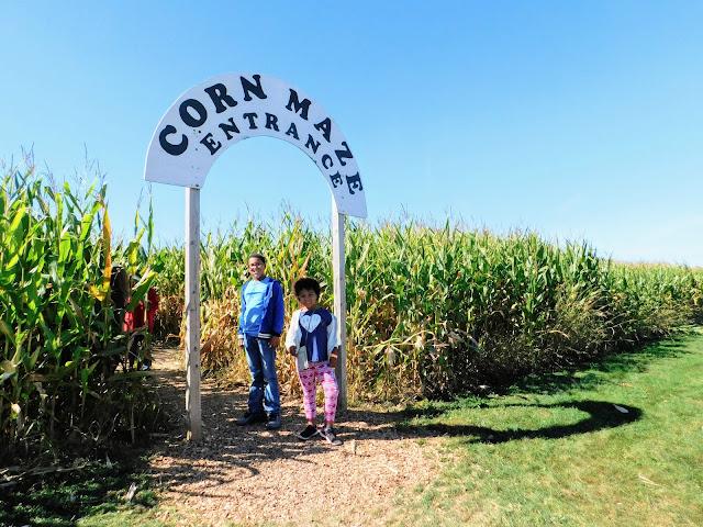 Patterson's Farm Corn Maze