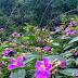 Bên đồi hoa mua ở Hưng Long- Lê Thanh Hùng