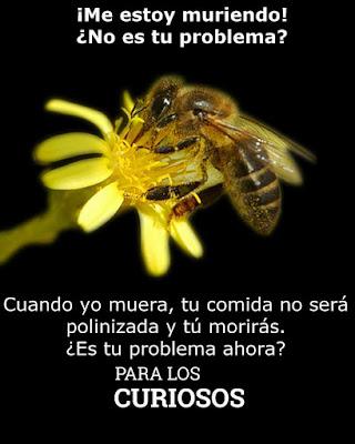 Si las abejas se extinguen el hombre también