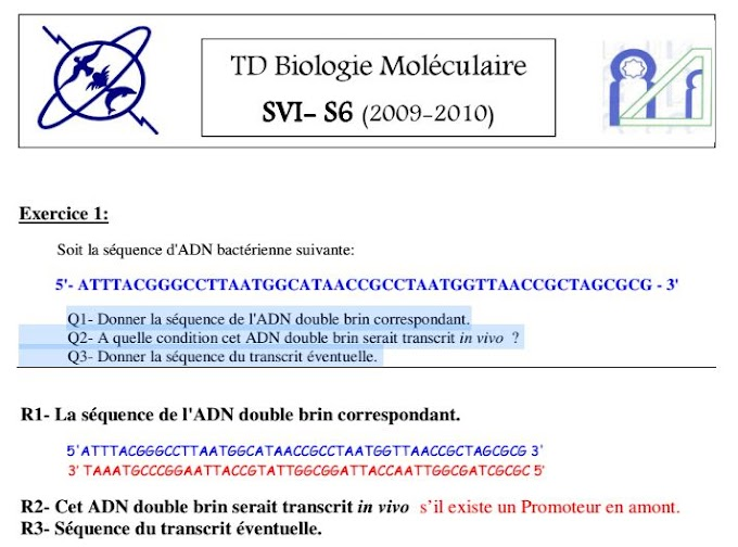 Exercice corrigé en biologie moléculaire - ADN