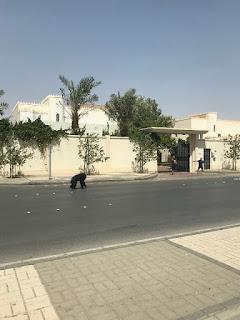 غوريلا تثير الرعب في نفوس المواطنين في العاصمة السعودية الرياض