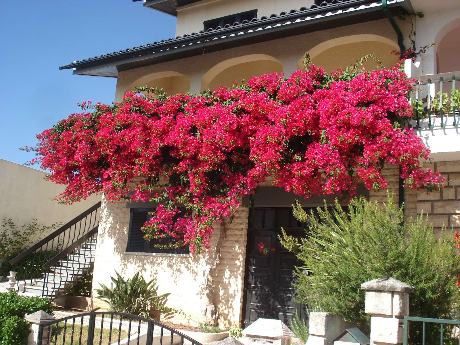 Helen and Peter in Portugal: oh what a lovely bougainvillea