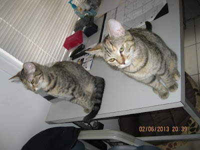 two cats on table acting like bookends