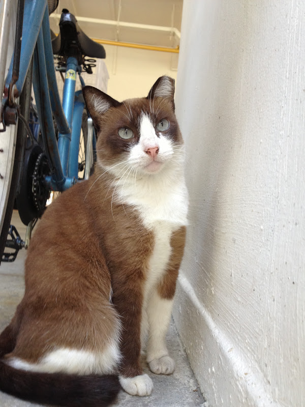 Singapore Community Cats: A good-looking community cat in ...