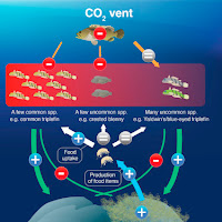 fish community compositions a high-CO2 Vent (Credit: Current Biology) Click to Enlarge.