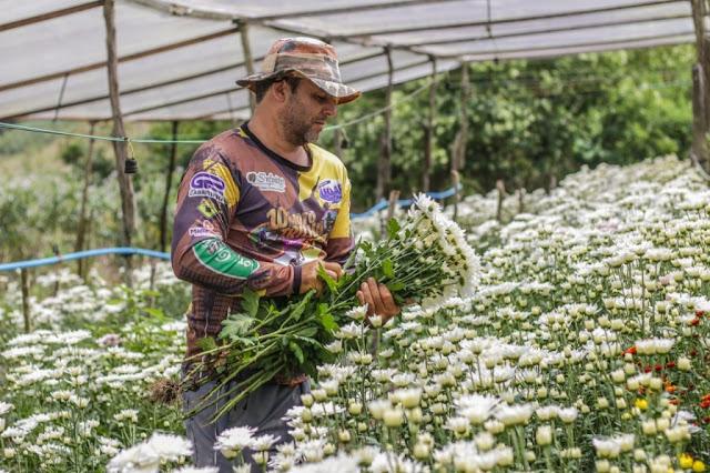 Flores gravataenses serão expostas na 26º Agrinordeste