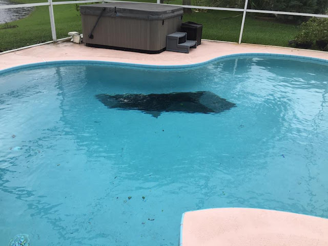 our pool during a hurricane and part of our roof in the pool