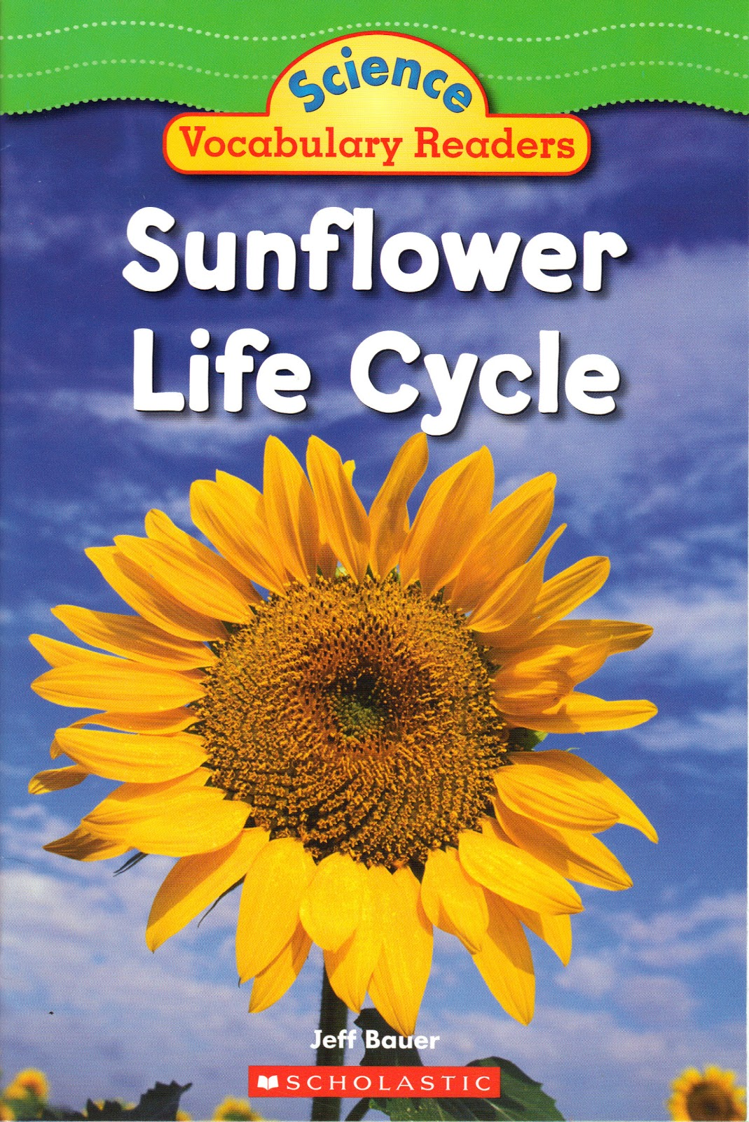 Kindergartners At Work Sunflower Study