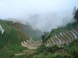 terrace farming india