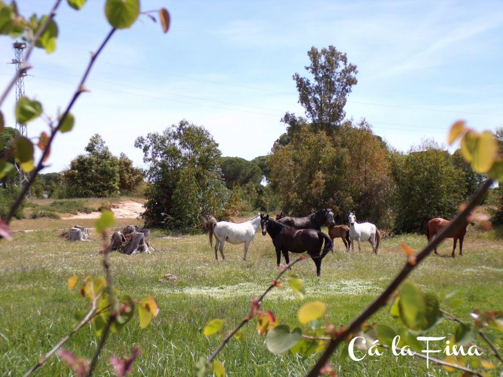 caballos-salvajes-doñana