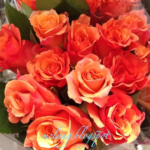 Attractive Roses