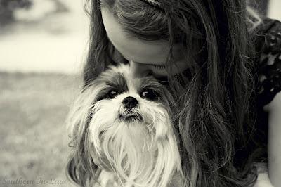 Kristy and Chanel - Shitzu cross Chihuahua Puppy