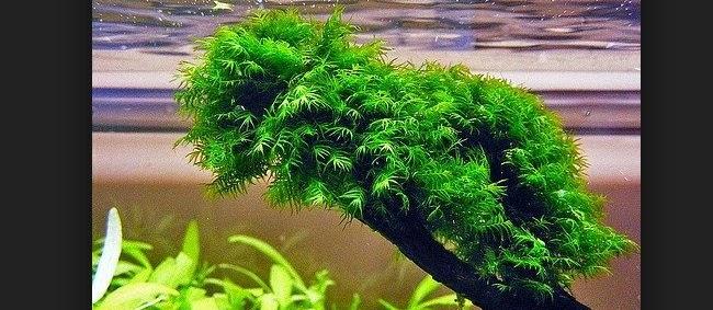 Jenis Tanaman Aquascape yang Mudah Perawatannya serta Cepat Tumbuh