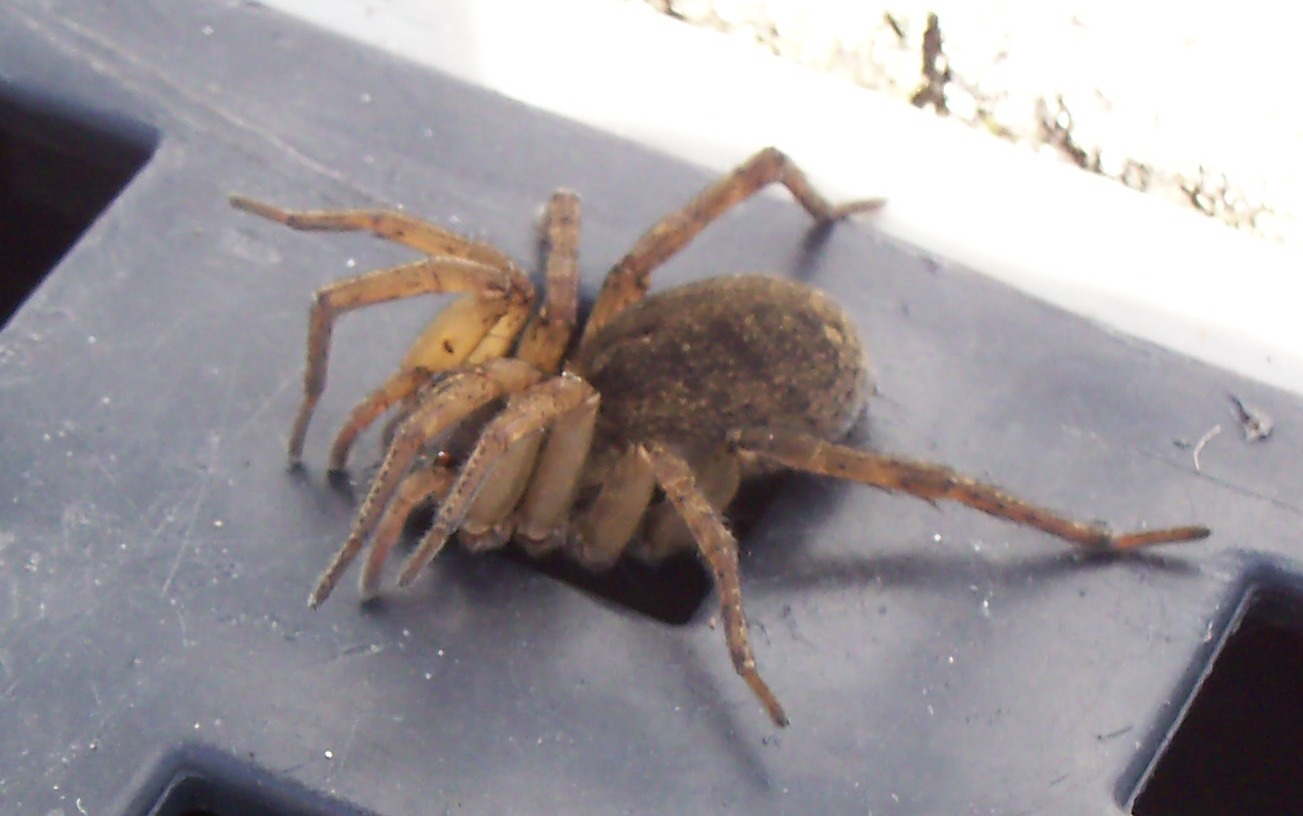 UK spider identification: 17 common British spiders you might find this autumn