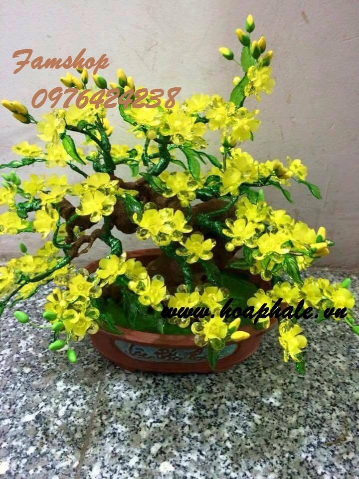 Goc bonsai mai dao tai Nguyen Thai Hoc