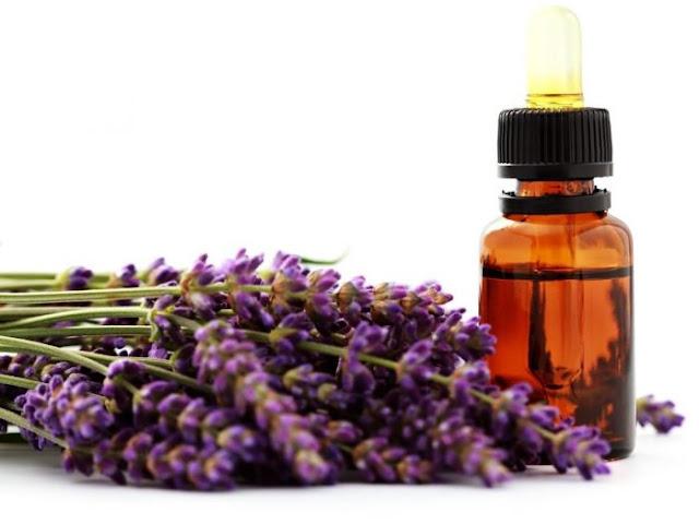 essential-oils-natural-oils-for-control-fleas-essential-oils-for-fleas-on-dogs-fleas-and-ticks-natural-oils-to-remove-fleas Lavender oil