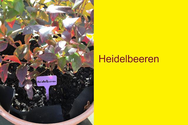 Namensschild Heidelbeere