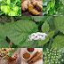 7 Tanaman Herbal Untuk Mengatasi Hernia Tanpa Operasi