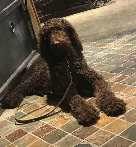Service Dog Stolen Killed South Carolina