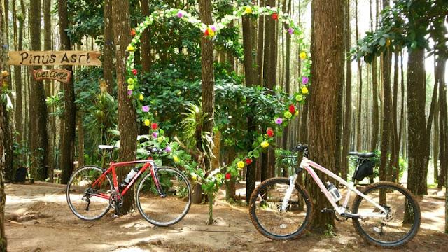 Pinus Pengger Dlingo